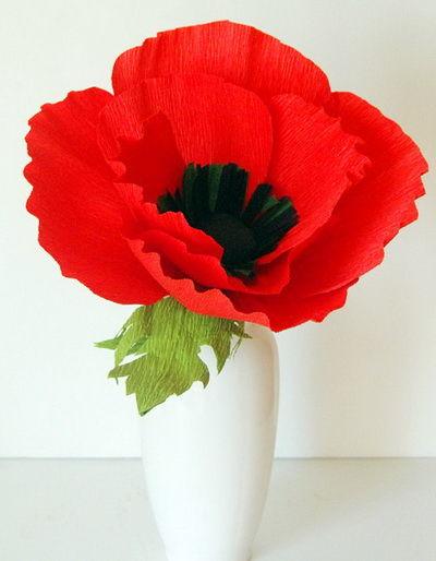hoa-poppy-giay-h10