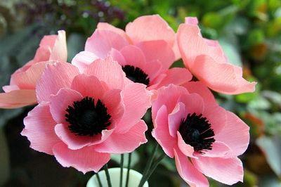 hoa-poppy-giay-h8