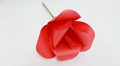 hoa-tulip-giay-h11