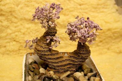cay-bonsai-tu-bia-cac-tong-h5