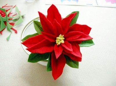 hoa-vai-trang-nguyen-h4