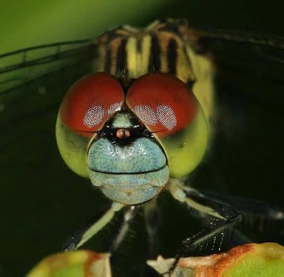 macro-micro-close-up-4