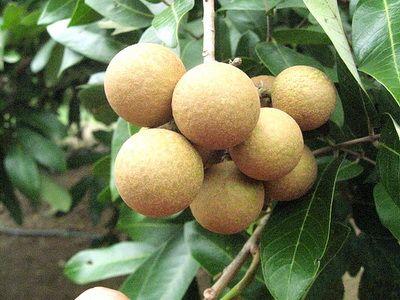 TraiCay HoaChat 1 6 loại trái cây mùa hè hay bị ngâm hóa chất