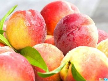 TraiCay HoaChat 2 6 loại trái cây mùa hè hay bị ngâm hóa chất