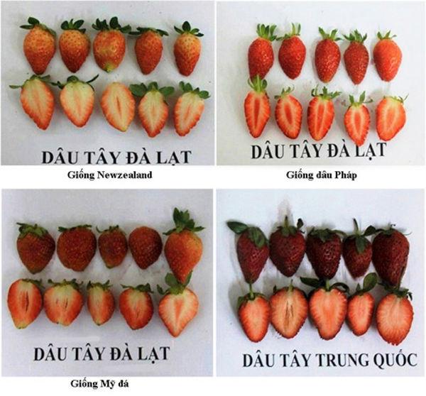 dau-tay-1