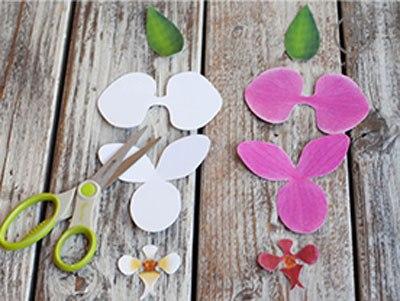 hoa-phong-lan-5-12-1