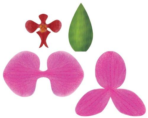 hoa-phong-lan-5-12-11