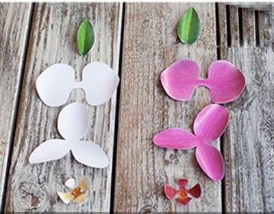 hoa-phong-lan-5-12-2