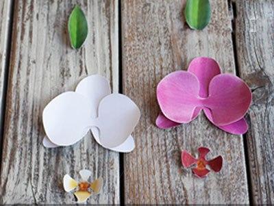hoa-phong-lan-5-12-3