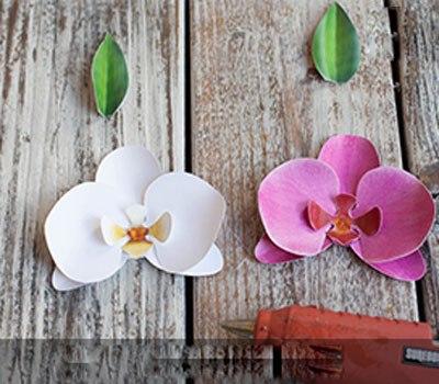 hoa-phong-lan-5-12-4