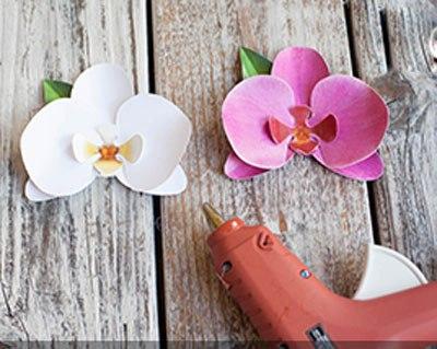 hoa-phong-lan-5-12-5