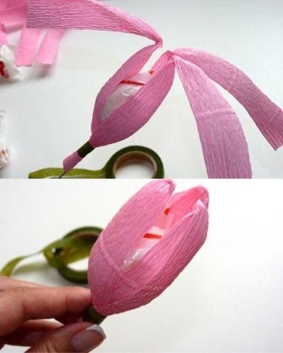 hoa-tulip-16-6-3