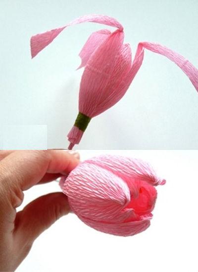 hoa-tulip-16-6-4