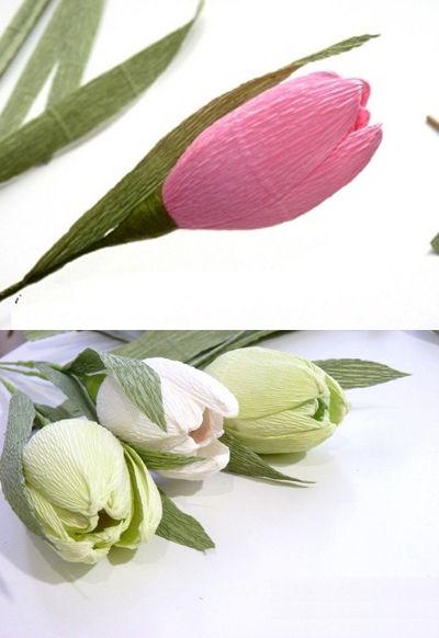 hoa-tulip-16-6-7