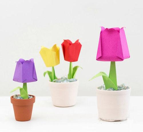 chau-hoa-tulip-20-8-10