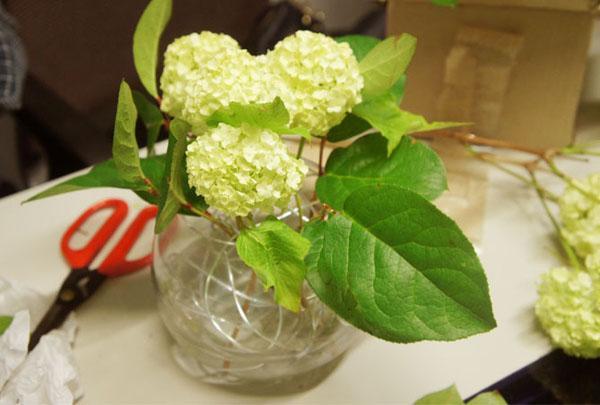 cam-hoa-trang-xanh_12.09.15_4