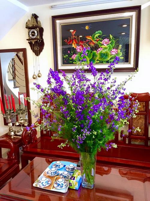 cam-hoa-violet-tuoi-lau-den-7-ngay-2
