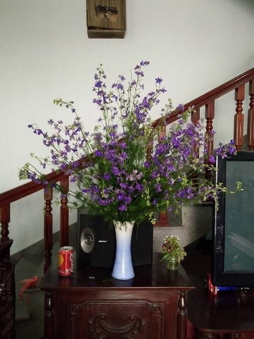 cam-hoa-violet-tuoi-lau-den-7-ngay-3