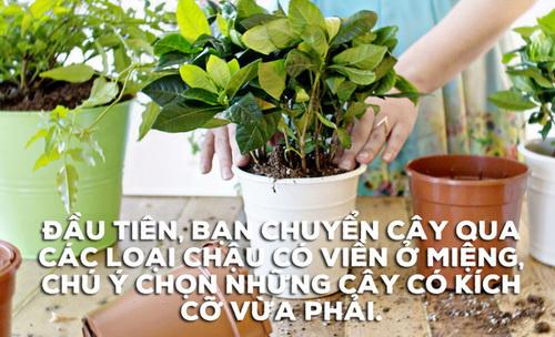 bien-vuon-nha-ban-dep-nhu-quan-ca-phe-chi-trong-mot-not-nhac-2