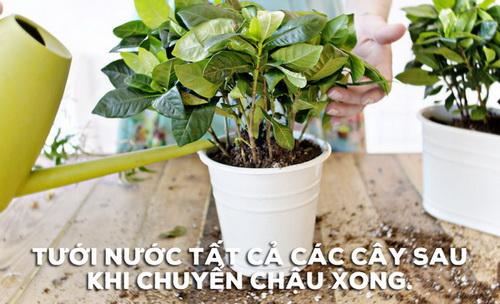 bien-vuon-nha-ban-dep-nhu-quan-ca-phe-chi-trong-mot-not-nhac-3